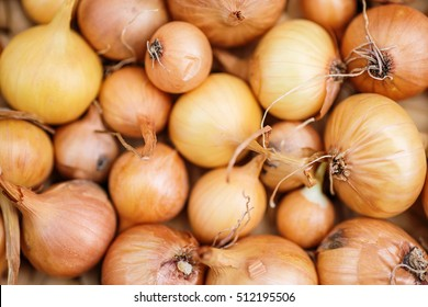 Fresh onions. Onions background. Ripe onions. Onions in market