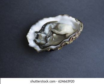 Fresh open oyster (Pacific Oyster) in shell isolated on dark background