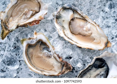 Fresh opened oyster offered as top view on crushed ice