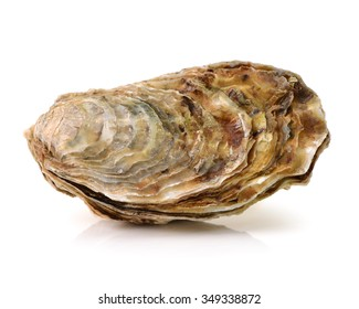 Fresh opened oyster on white background