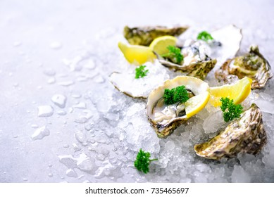Fresh opened oysters, lemon, herbs, ice on concrete stone grey background. Top view, copy space