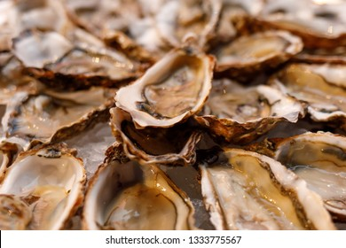 fresh opened oysters on plate arranged circularly