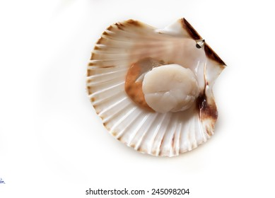 Fresh opened scallop on white background