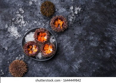 Fresh opened sea urchins on ice over dark concrete background. Overhead view, copy space