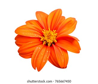 Fresh orange flower isolated on white background, clipping path. Nature concept