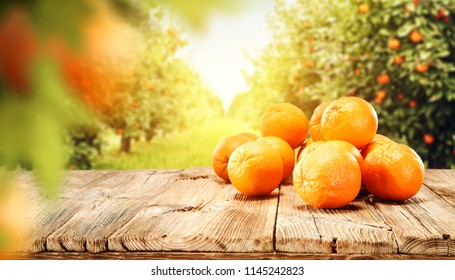 Fresh orange fruits in garden and summer sun light. Free space for your text.