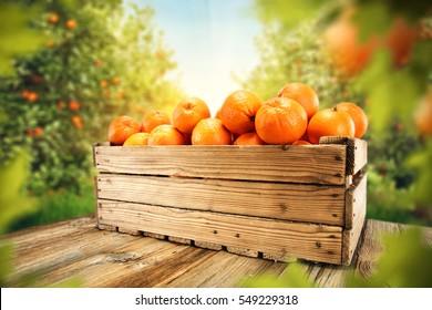 fresh orange fruits and leaves of trees