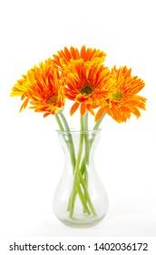 Fresh orange gerbera flower in glass vase on white background