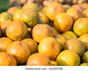 Fresh oranges in market, sweet and sour fruit, with green background