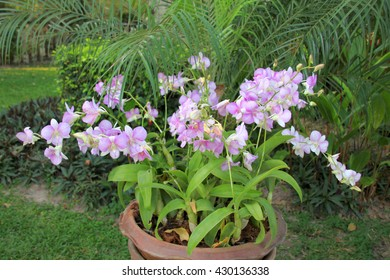 fresh orchids flowers in tropical garden