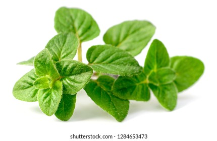 fresh oregano herb isolated on the white background