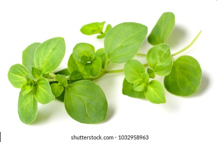 fresh oregano isolated on white