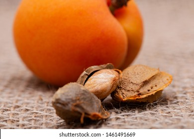 "Fresh Organic Apricots and Apricot Kernels (the seed of an apricot, often called a ""stone"") on natural burlap background. Amygdalin. Vitamin B17."