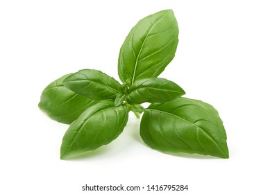 Fresh organic basil leaves, close-up, isolated on white background.