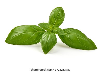 Fresh organic basil leaves, isolated on white background.