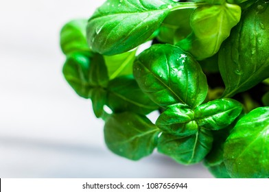 Fresh organic basil on marble table, drops of water, selective focus