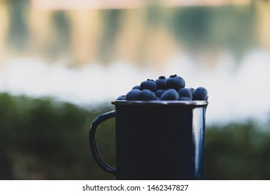 Fresh, organic blueberries picked and in a mug