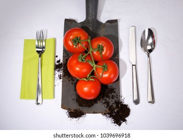 Fresh organic kitchen garden tomatoes on spade, cutlery and tablecloth