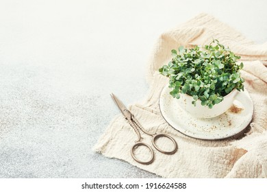 Fresh organic microgreens in a white ceramic cup. Healthy and vegan food