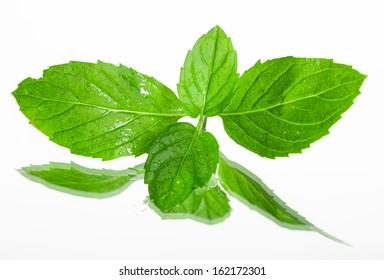 Fresh organic mint leaves on white background