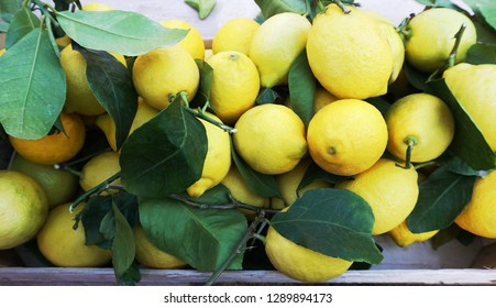 Fresh organic and natural lemon with leaves on market desk. Latin name this fruit is Citrus Limon