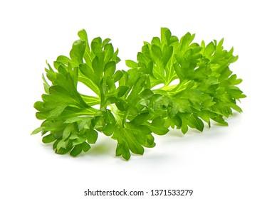 Fresh organic parsley, close-up, isolated on white background.