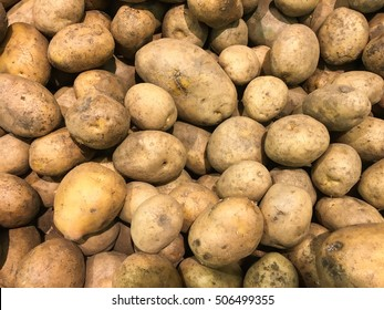 Fresh organic potato stand out among many large background potatoes in the market. Heap of potato root. Close-up potatoes texture.
