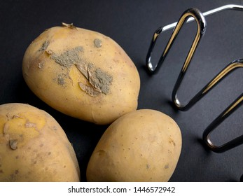 Fresh organic potatoes on black background with potato masher. Top view close up