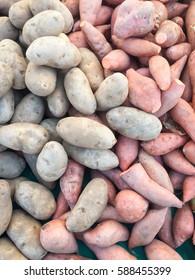 Fresh organic potatoes and sweet yams on display at farmer's market.