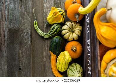Fresh organic pumpkins from the local farmers market.