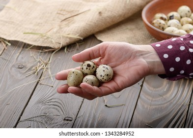 Fresh organic quail eggs in woman hands over wooden rustic kitchen table. Space for text