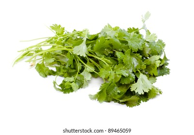 Fresh organic raw coriander leaf isolated on white background. Culinary aromatic herb.