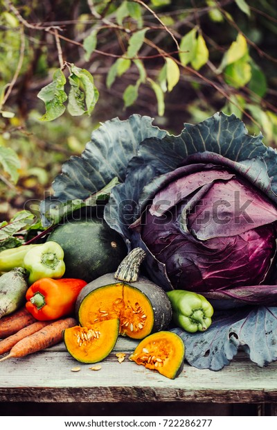 Fresh Organic Raw Vegetables Autumn Garden Stock Photo Edit Now