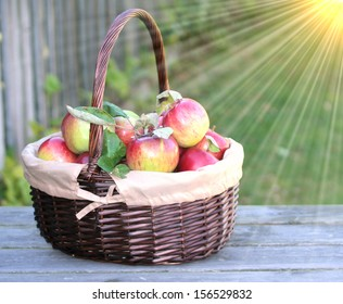 Fresh organic red apples in a basket  on the old table with sun flare