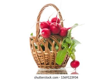 fresh organic red radish isolated on white background