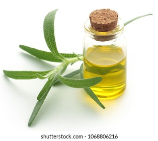 Fresh organic rosemary with essential oil over white background