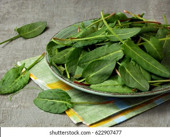 Fresh organic sorrel leaves in metal plate on grey concrete background. Healthy food concept.