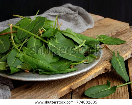 Fresh organic sorrel leaves in metal plate for salad or soup. First spring greens.  Healthy food concept. Copy space