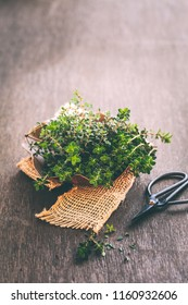 Fresh organic thyme of rustic wooden background