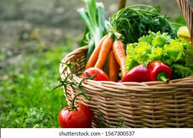 Frisches ökologisches Gemüse, örtliche Lebensmittel, frisch aus dem Garten geerntet