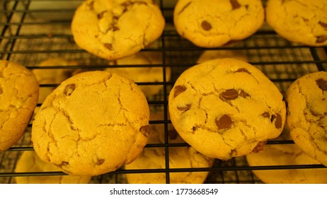 Fresh out of the oven Homemade Chocolatechip Cookie