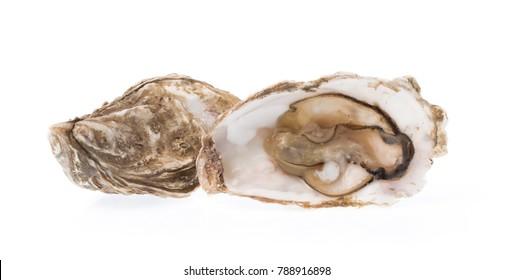 Fresh oyster isolated on white background