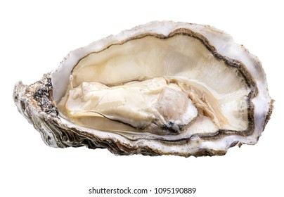 Fresh oyster isolated with shadow on white background. Clipping path.