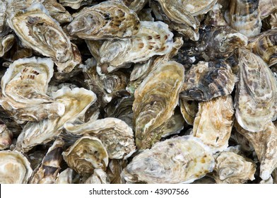 A lot of fresh oysters