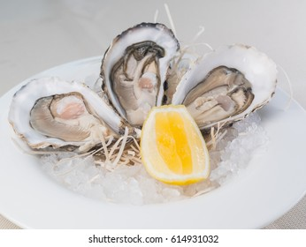 Fresh oysters with lemon on white plate in restaurant