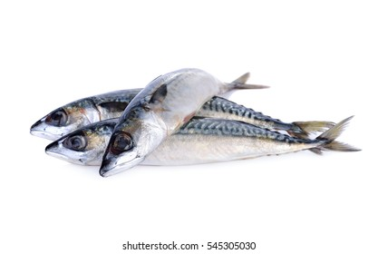 fresh pacific mackerel fish on white background