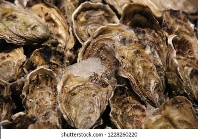Fresh Pacific oysters on ice on display at a seafood market stall. The harvested  salt water molluscs are still closed and sold alive. Oysters are protein rich and eaten raw with lemon as a delicacy