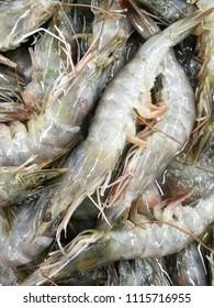 fresh Pacific white Shrimp