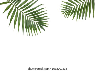 Fresh palm leaves isolated on white background. Flat lay tropical concept.