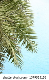 The fresh palm leaves on the beautiful clean water background . Tropical plants at the beach resort.
